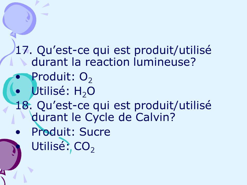 17. Quest-ce qui est produit/utilisé durant la reaction lumineuse? Produit: O 2 Utilisé: H 2 O 18. Quest-ce qui est produit/utilisé durant le Cycle de