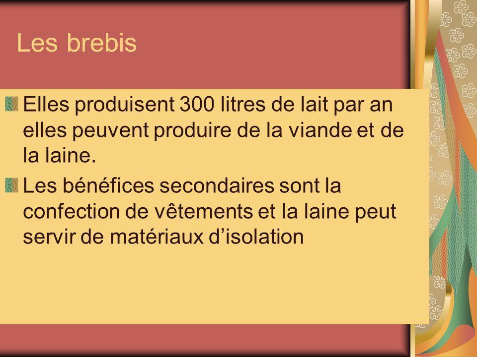 Les brebis Elles produisent 300 litres de lait par an elles peuvent produire de la viande et de la laine. Les bénéfices secondaires sont la confection