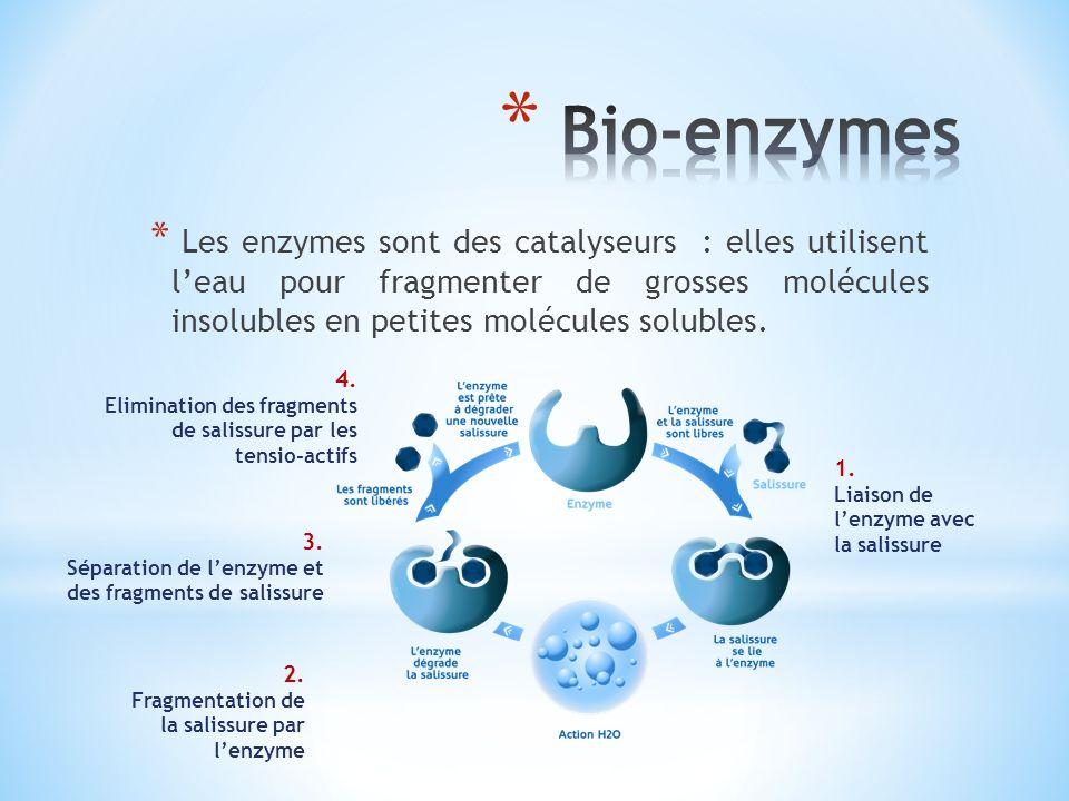 * Les enzymes sont des catalyseurs : elles utilisent leau pour fragmenter de grosses molécules insolubles en petites molécules solubles. 1. Liaison de