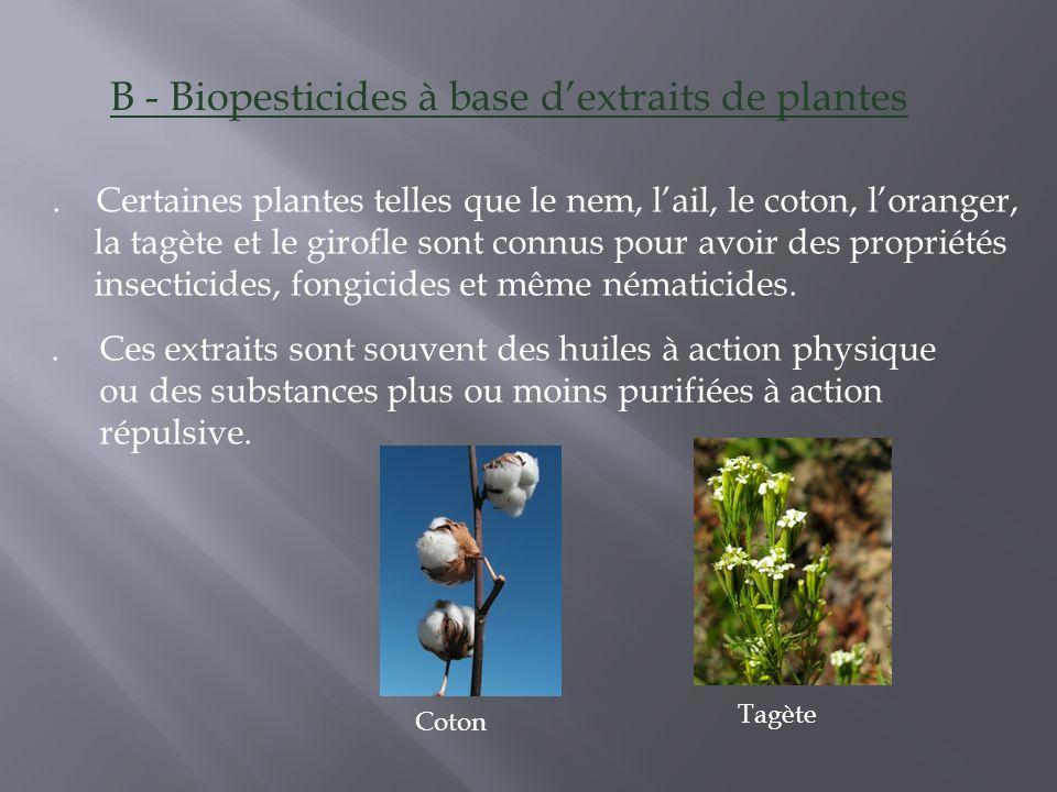 . Ces extraits sont souvent des huiles à action physique ou des substances plus ou moins purifiées à action répulsive. Tagète Coton B - Biopesticides
