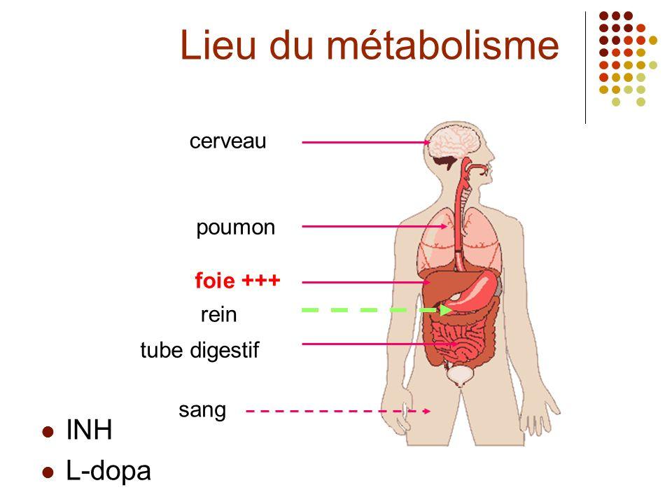 INH L-dopa cerveau poumon foie +++ rein tube digestif Lieu du métabolisme sang