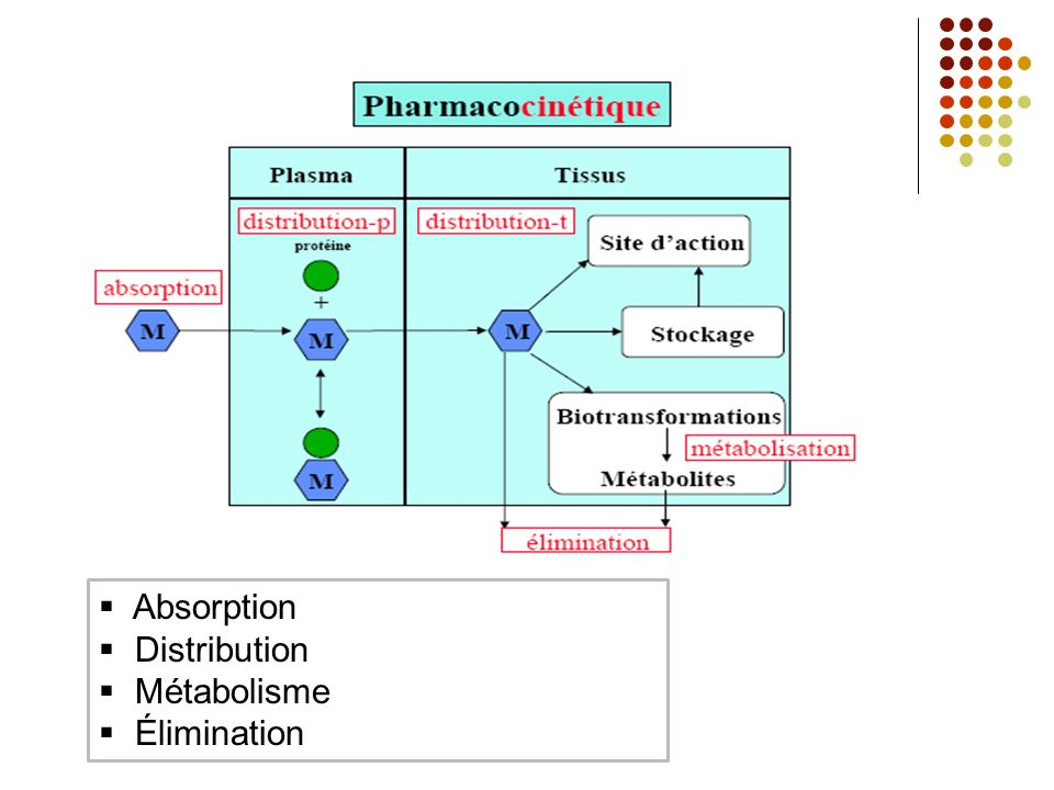 Formation dun métabolite inactif à partir dune molécule active Phénobarbital hydroxyphénnobarbital métabolite actif à partir dune substance initialement inactive Vit D (prodrogue) hydroxylation (foie) 25 hydroxycalciferol hydroxylation (rein) calcitriol