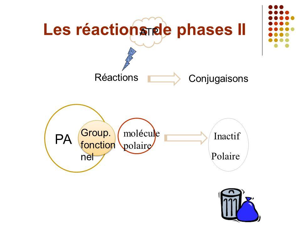 Les réactions de phases II ATP Réactions PA mol é cule polaire Group.
