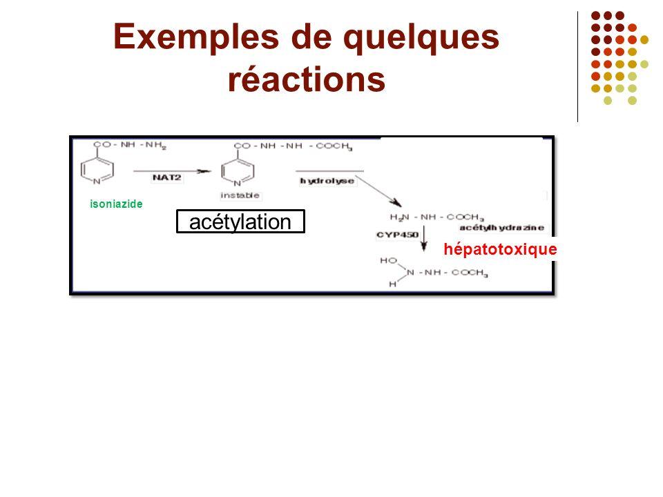 Exemples de quelques réactions H isoniazide hépatotoxique acétylation