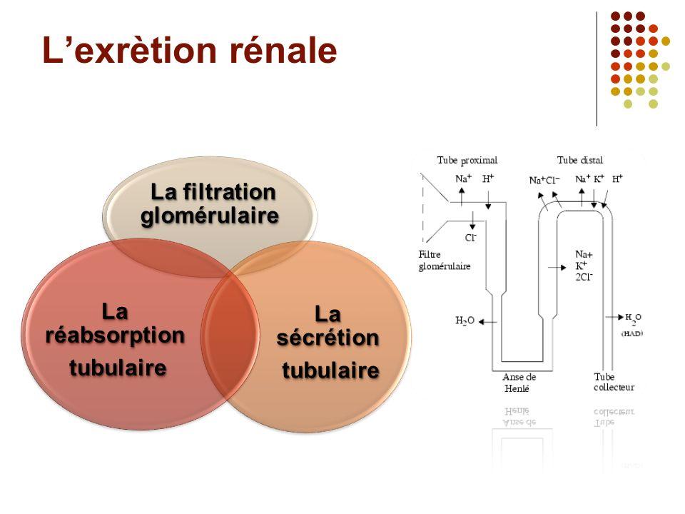 Lexrètion rénale La filtration glomérulaire La filtration glomérulaire La sécrétion tubulaire tubulaire La réabsorption tubulaire tubulaire