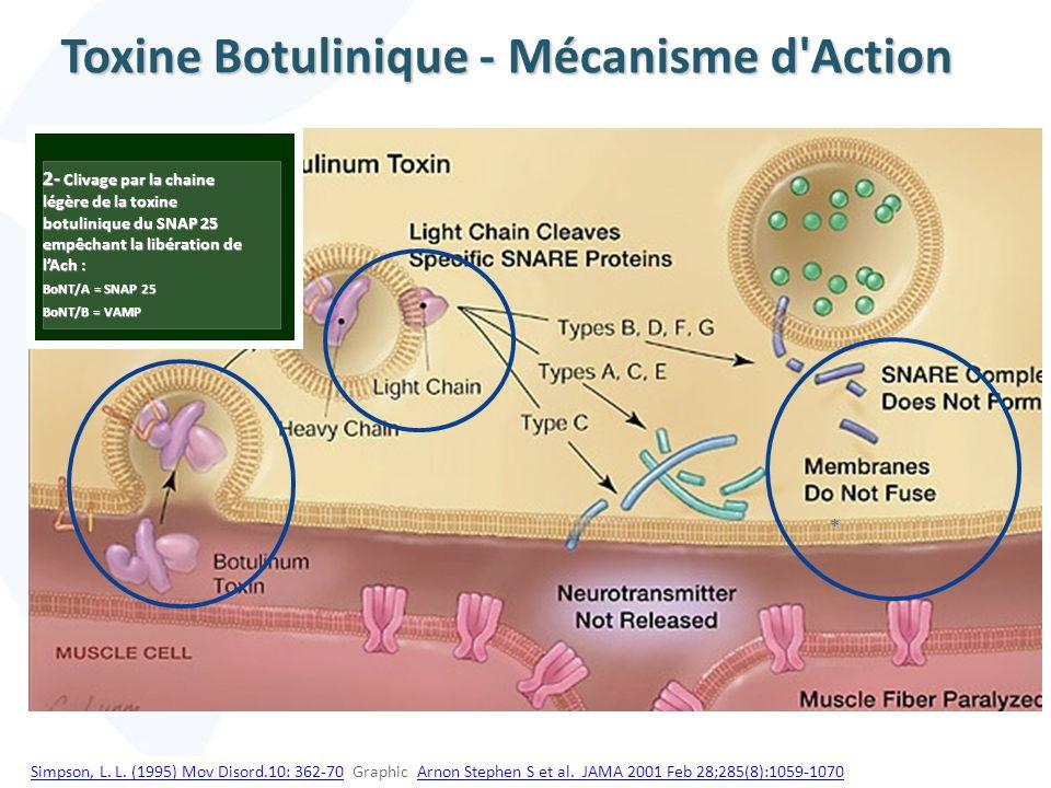 * 2- Clivage par la chaine légère de la toxine botulinique du SNAP 25 empêchant la libération de lAch : BoNT/A = SNAP 25 BoNT/B = VAMP Toxine Botulini