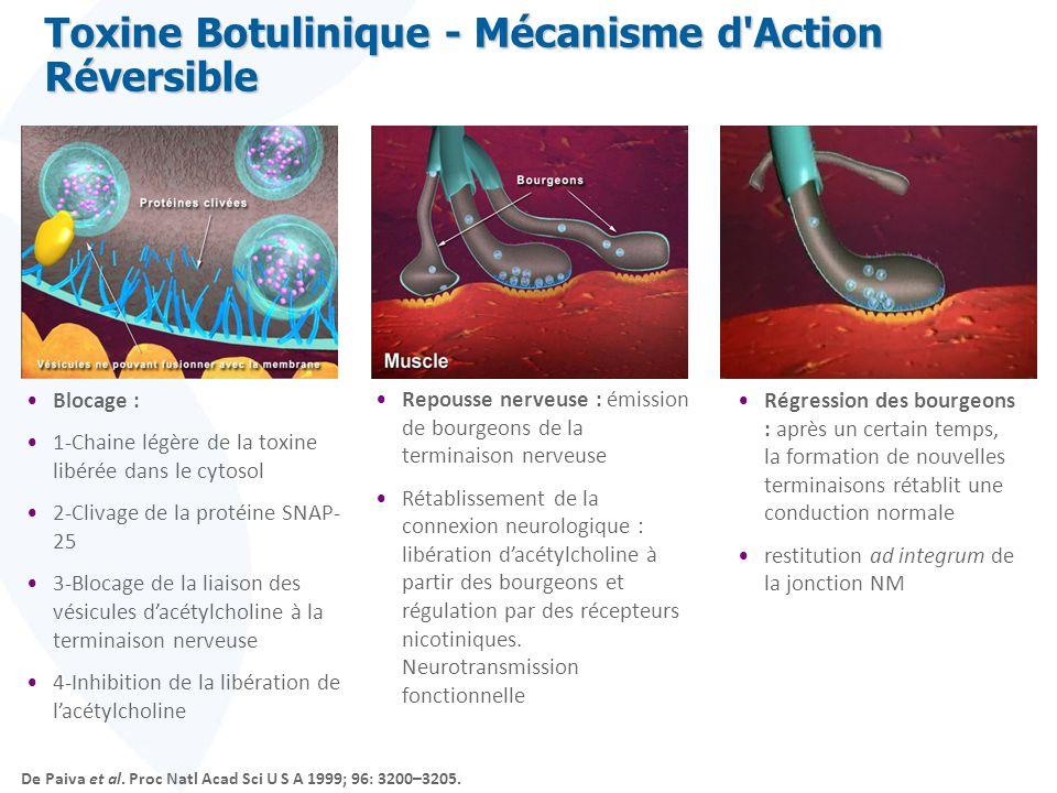 Blocage : 1-Chaine légère de la toxine libérée dans le cytosol 2-Clivage de la protéine SNAP- 25 3-Blocage de la liaison des vésicules dacétylcholine