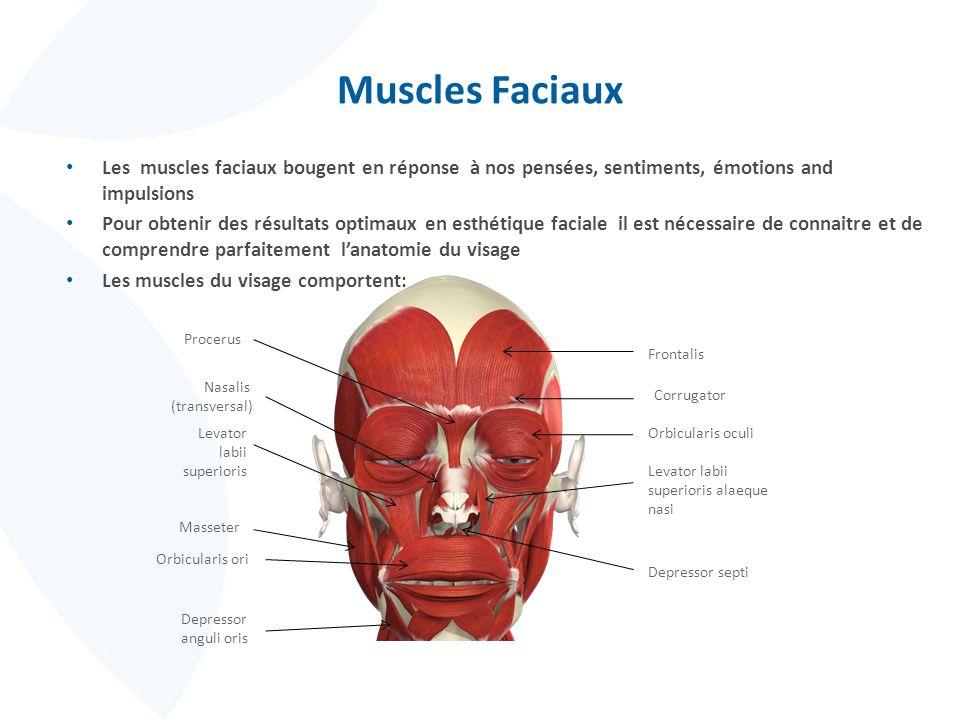 Muscles Faciaux Les muscles faciaux bougent en réponse à nos pensées, sentiments, émotions and impulsions Pour obtenir des résultats optimaux en esthé