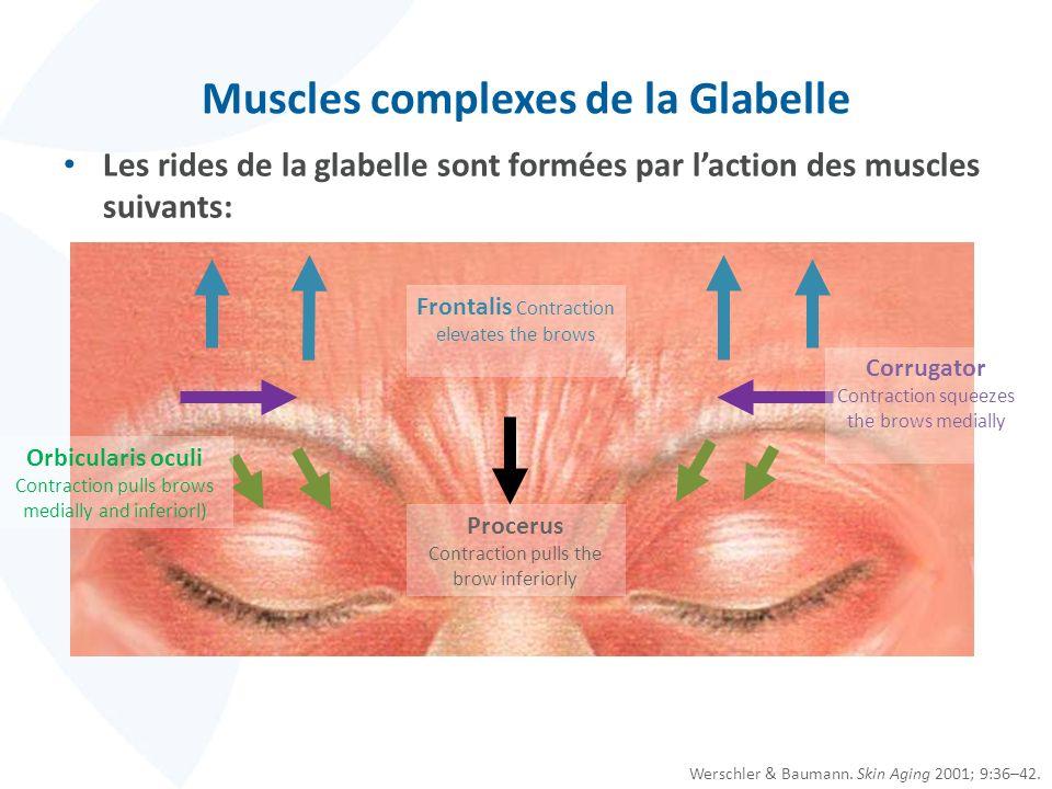 Muscles complexes de la Glabelle Les rides de la glabelle sont formées par laction des muscles suivants: Werschler & Baumann. Skin Aging 2001; 9:36–42