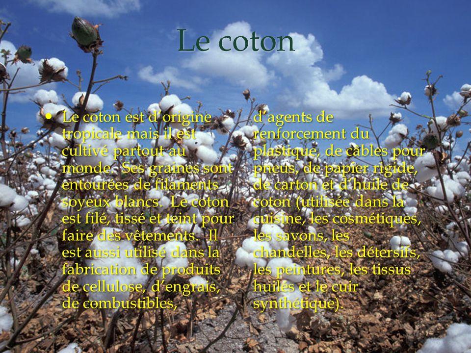 Le coton Le coton est dorigine tropicale mais il est cultivé partout au monde. Ses graines sont entourées de filaments soyeux blancs. Le coton est fil