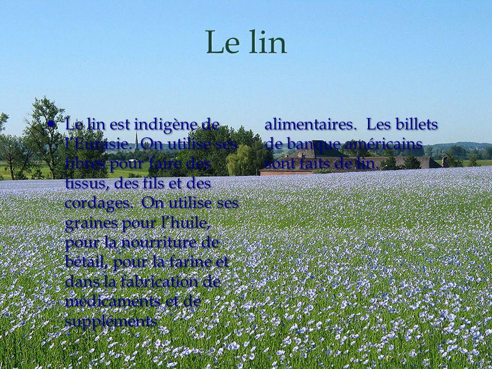 Le lin Le lin est indigène de lEurasie. On utilise ses fibres pour faire des tissus, des fils et des cordages. On utilise ses graines pour lhuile, pou