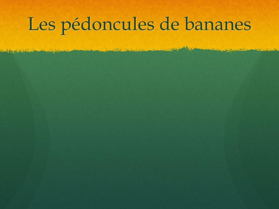 Les pédoncules de bananes