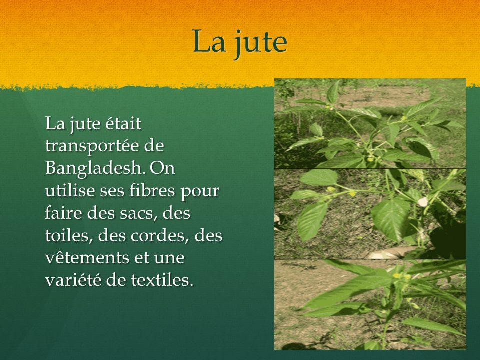 La jute La jute était transportée de Bangladesh. On utilise ses fibres pour faire des sacs, des toiles, des cordes, des vêtements et une variété de te