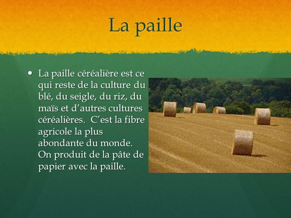 La paille La paille céréalière est ce qui reste de la culture du blé, du seigle, du riz, du maïs et dautres cultures céréalières. Cest la fibre agrico