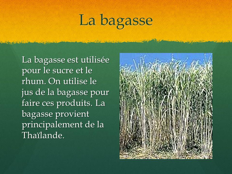 La bagasse La bagasse est utilisée pour le sucre et le rhum. On utilise le jus de la bagasse pour faire ces produits. La bagasse provient principaleme