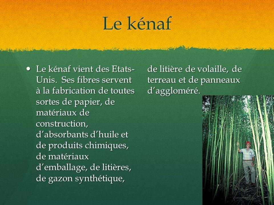 Le kénaf Le kénaf vient des Etats- Unis. Ses fibres servent à la fabrication de toutes sortes de papier, de matériaux de construction, dabsorbants dhu