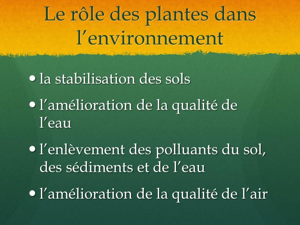 Le rôle des plantes dans lenvironnement la stabilisation des sols la stabilisation des sols lamélioration de la qualité de leau lamélioration de la qu