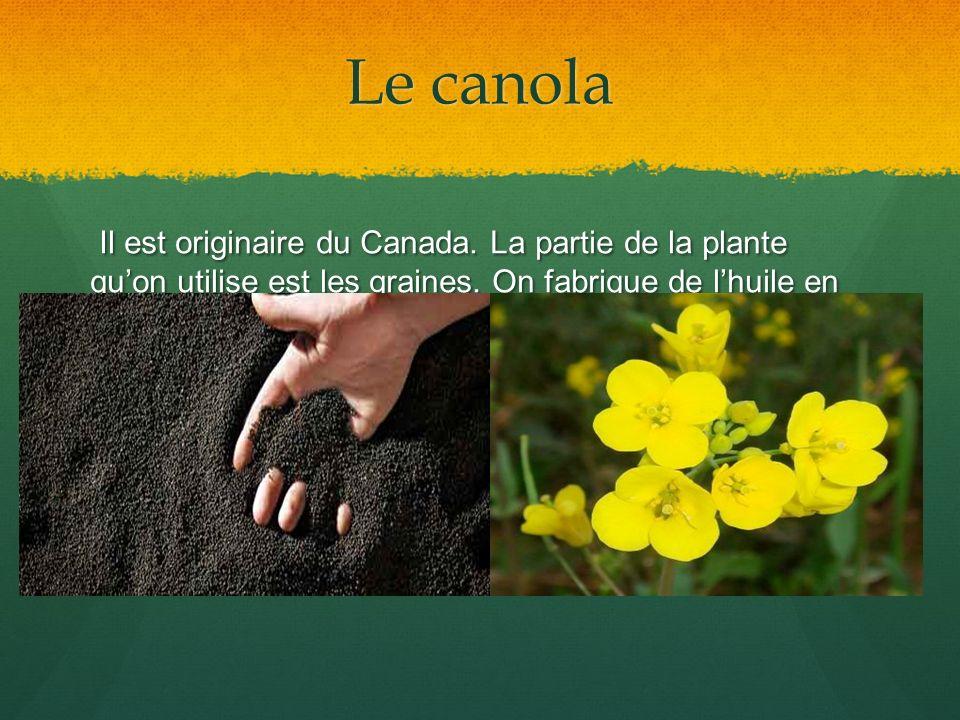 Le canola Il est originaire du Canada. La partie de la plante quon utilise est les graines. On fabrique de lhuile en pressant les graines. Il est orig