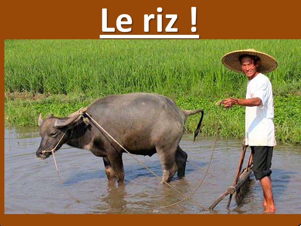 Le riz ! µ