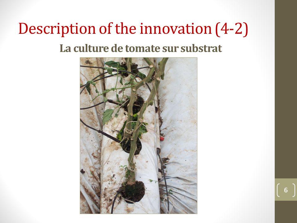 La culture de tomate sur substrat 6 Description of the innovation (4-2)