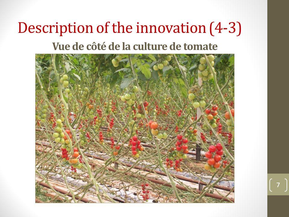 Vue de côté de la culture de tomate 7 Description of the innovation (4-3)