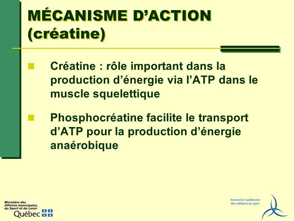 MÉCANISME DACTION (créatine) Créatine : rôle important dans la production dénergie via lATP dans le muscle squelettique Phosphocréatine facilite le tr