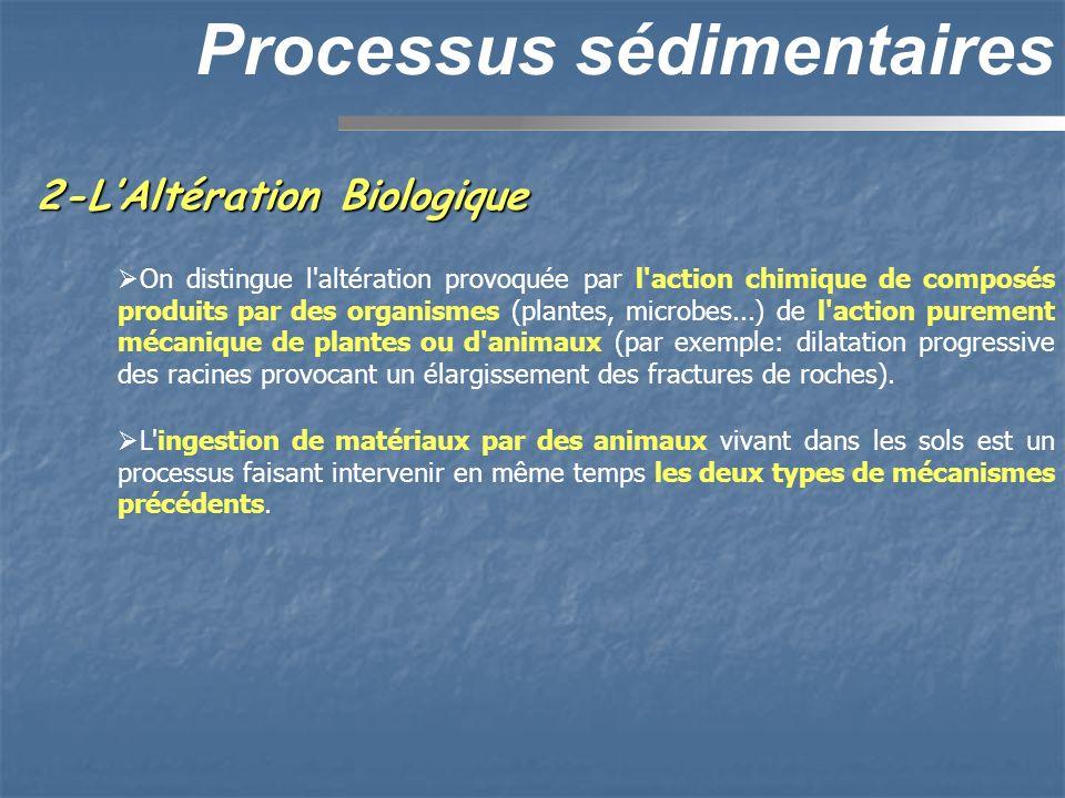 2-LAltération Biologique Processus sédimentaires On distingue l'altération provoquée par l'action chimique de composés produits par des organismes (pl
