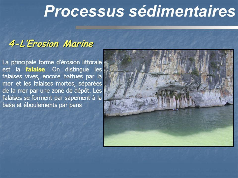 4-LErosion Marine Processus sédimentaires La principale forme d'érosion littorale est la falaise. On distingue les falaises vives, encore battues par