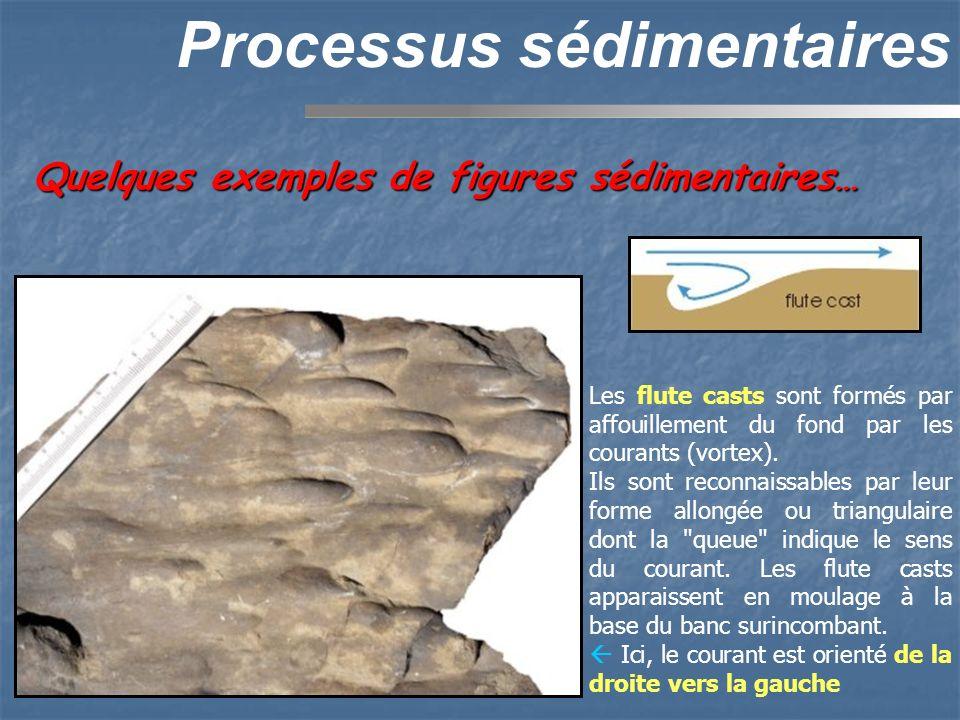 Quelques exemples de figures sédimentaires… Processus sédimentaires Les flute casts sont formés par affouillement du fond par les courants (vortex). I