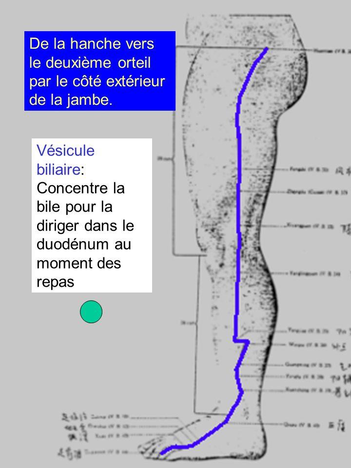 Vésicule biliaire: Concentre la bile pour la diriger dans le duodénum au moment des repas De la hanche vers le deuxième orteil par le côté extérieur d