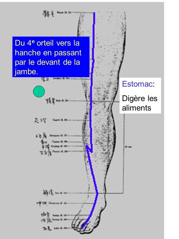 Estomac: Digère les aliments Du 4 e orteil vers la hanche en passant par le devant de la jambe.