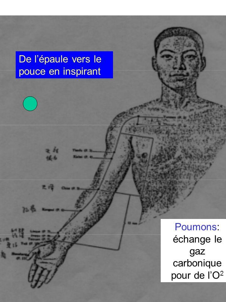 Poumons: échange le gaz carbonique pour de lO 2 De lépaule vers le pouce en inspirant