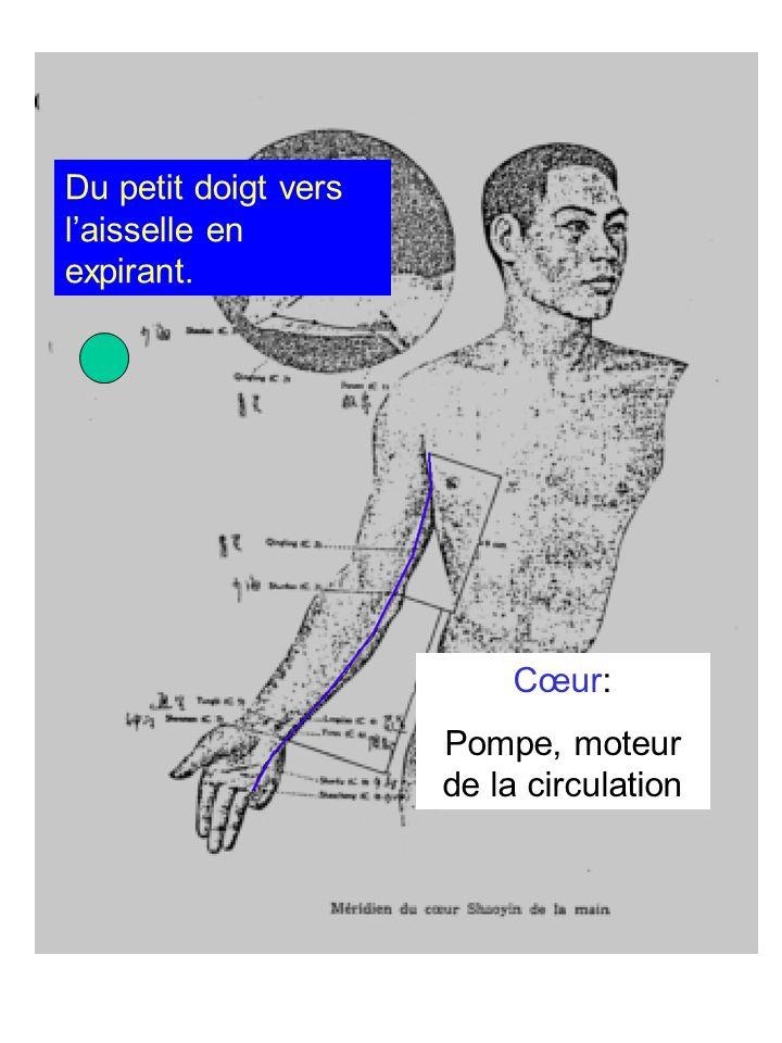 Cœur: Pompe, moteur de la circulation Du petit doigt vers laisselle en expirant.