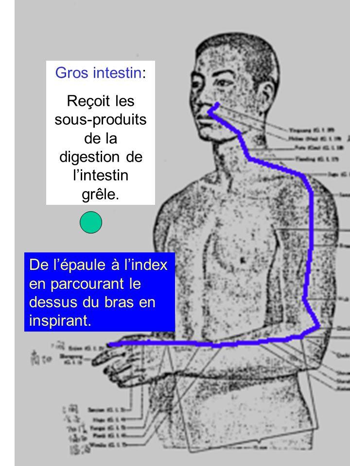 Intestin grêle: Absorbe les produits alimentaires qui passent ainsi dans le système lymphatique Du petit doigt vers lépaule en parcourant larrière du bras en expirant.