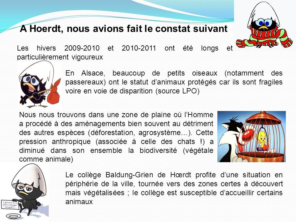 Les hivers 2009-2010 et 2010-2011 ont été longs et particulièrement vigoureux En Alsace, beaucoup de petits oiseaux (notamment des passereaux) ont le