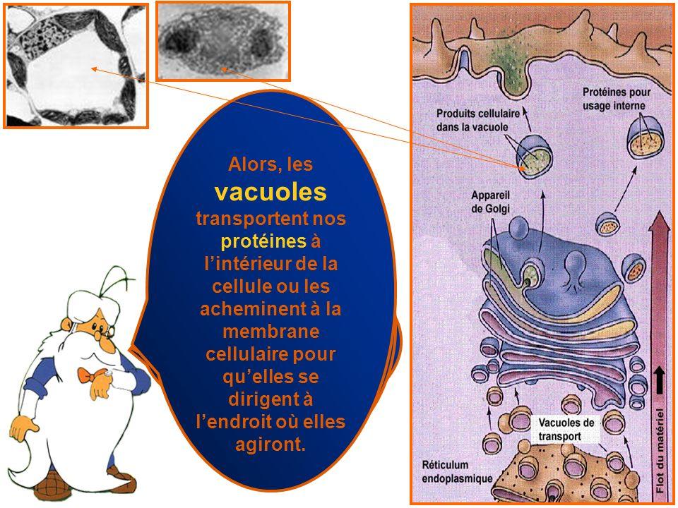 Est-ce que vous croyez que les protéines circulent librement dans la cellule? Non, non, non,… elles circulent dans des vacuoles, sinon elles pourraien