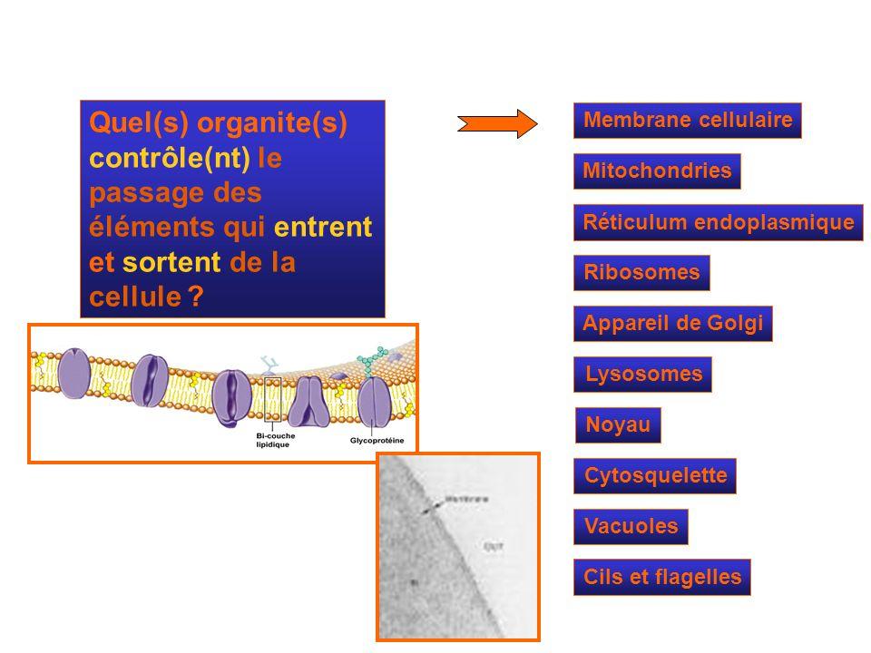 Mitochondries Ribosomes Réticulum endoplasmique Appareil de Golgi Lysosomes Cytosquelette Noyau Membrane cellulaire Quel(s) organite(s) contrôle(nt) l