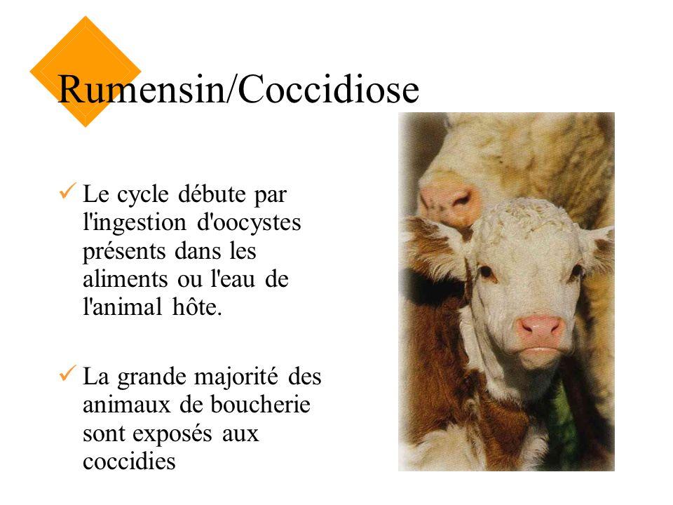 Rumensin/Coccidiose Le cycle débute par l'ingestion d'oocystes présents dans les aliments ou l'eau de l'animal hôte. La grande majorité des animaux de