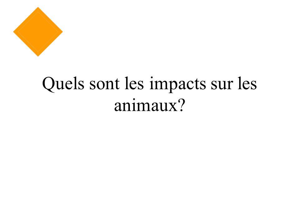 Quels sont les impacts sur les animaux?