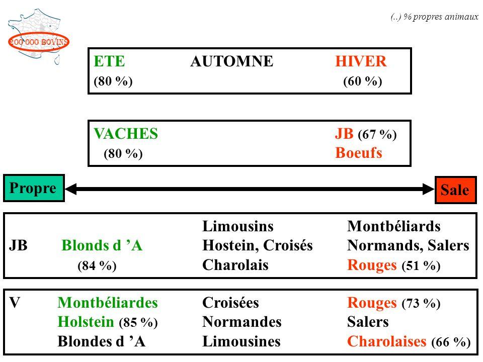200 000 bovins Propre Sale ETEAUTOMNEHIVER (80 %) (60 %) VACHESJB (67 %) (80 %) Boeufs LimousinsMontbéliards JB Blonds d A Hostein, CroisésNormands, S