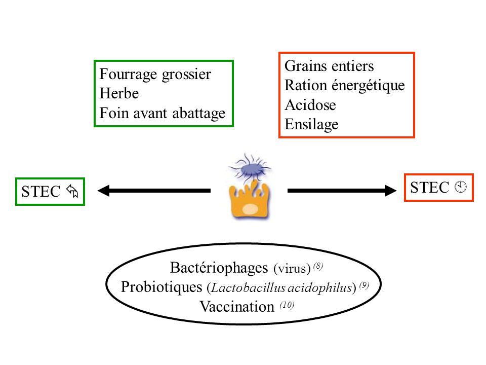 STEC Fourrage grossier Herbe Foin avant abattage Grains entiers Ration énergétique Acidose Ensilage Bactériophages (virus) (8) Probiotiques (Lactobaci