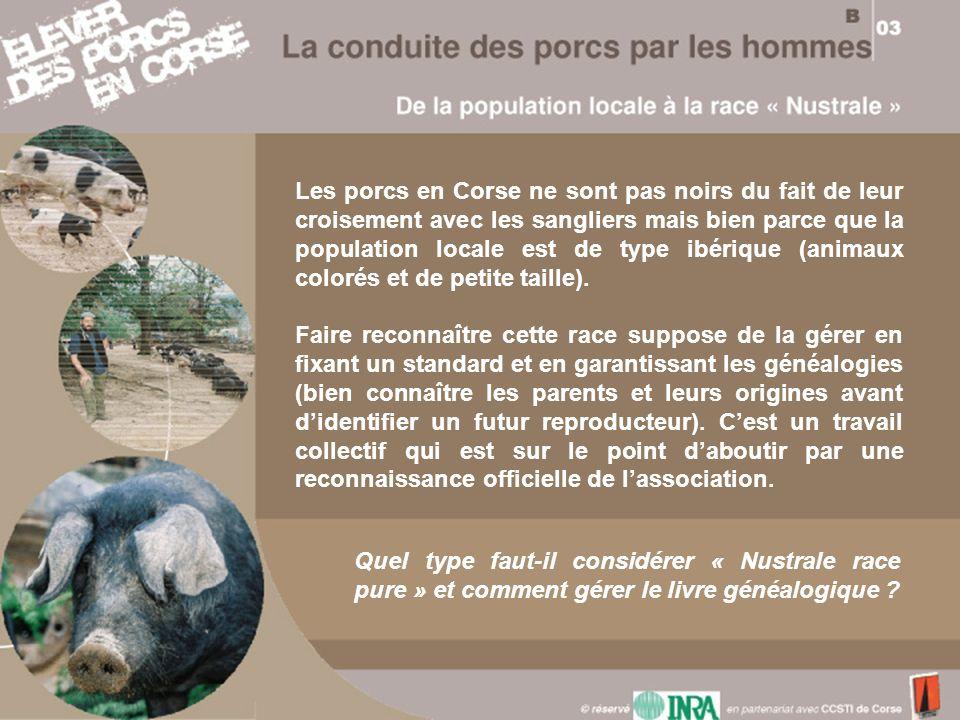 Les porcs en Corse ne sont pas noirs du fait de leur croisement avec les sangliers mais bien parce que la population locale est de type ibérique (anim