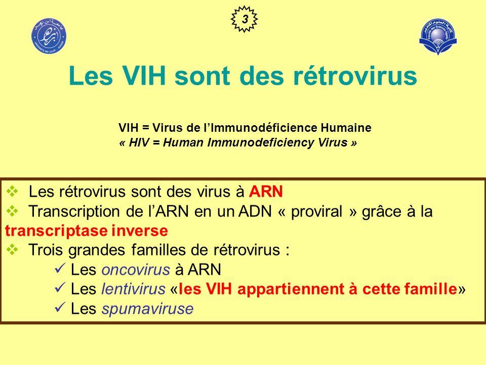 Les VIH sont des rétrovirus VIH = Virus de lImmunodéficience Humaine « HIV = Human Immunodeficiency Virus » 4