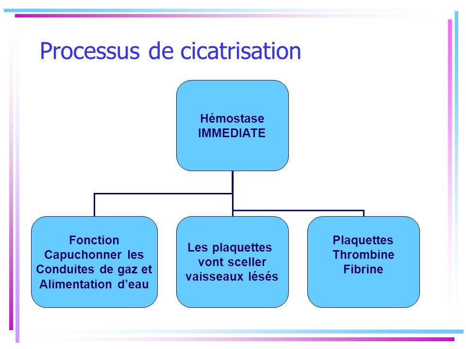 Processus de cicatrisation Hémostase IMMEDIATE Fonction Capuchonner les Conduites de gaz et Alimentation deau Les plaquettes vont sceller vaisseaux lé