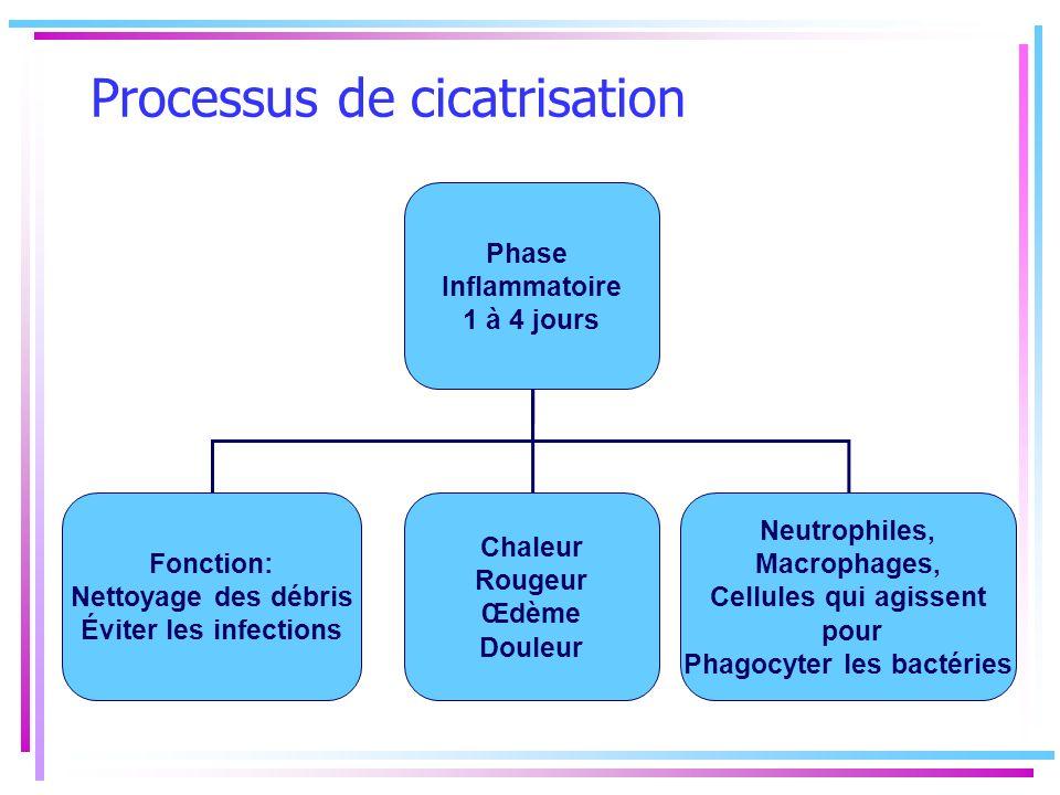 Processus de cicatrisation Phase Inflammatoire 1 à 4 jours Fonction: Nettoyage des débris Éviter les infections Chaleur Rougeur Œdème Douleur Neutroph