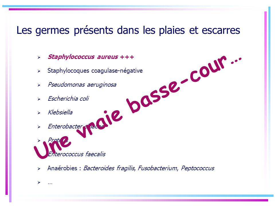 Les germes présents dans les plaies et escarres Staphylococcus aureus +++ Staphylocoques coagulase-négative Pseudomonas aeruginosa Escherichia coli Kl