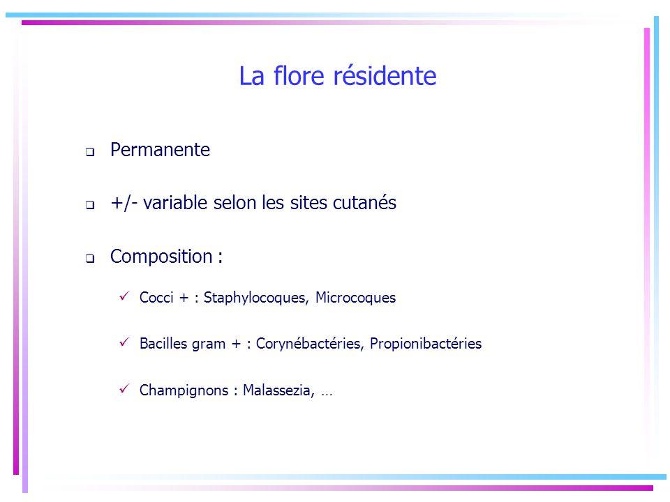 La flore résidente Permanente +/- variable selon les sites cutanés Composition : Cocci + : Staphylocoques, Microcoques Bacilles gram + : Corynébactéri