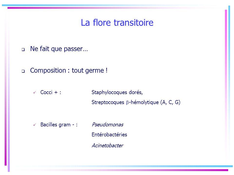La flore transitoire Ne fait que passer… Composition : tout germe ! Cocci + : Staphylocoques dorés, Streptocoques -hémolytique (A, C, G) Bacilles gram