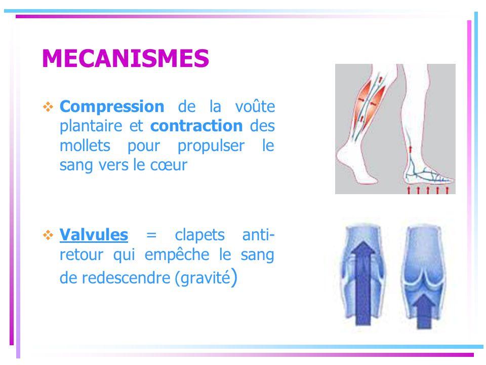 MECANISMES Compression de la voûte plantaire et contraction des mollets pour propulser le sang vers le cœur Valvules = clapets anti- retour qui empêch