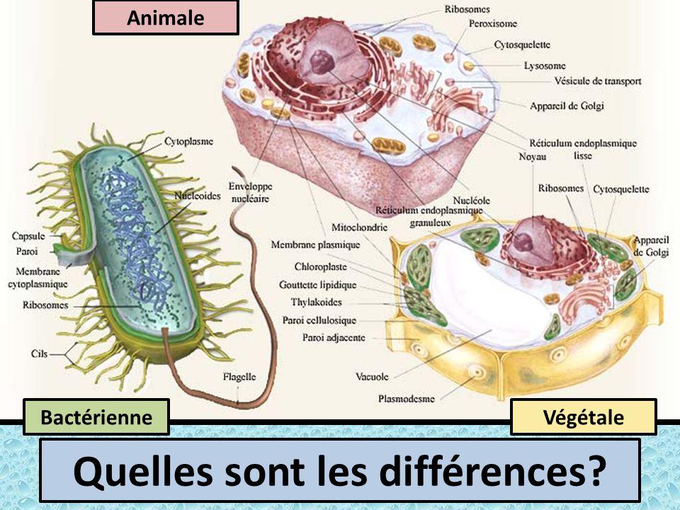 Animale BactérienneVégétale Quelles sont les différences?